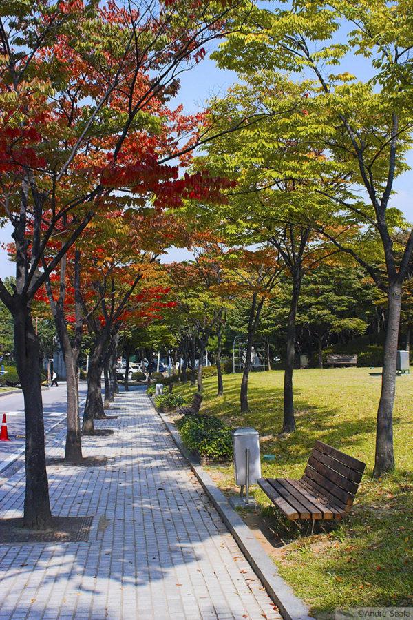 Outono em Seul