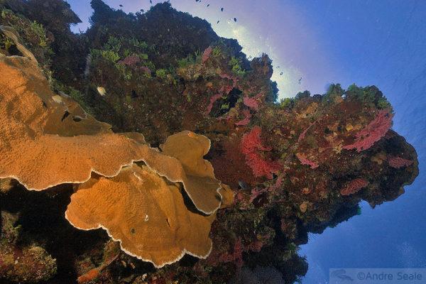 Falta de comunicação pelos corais das Ilhas Marshall