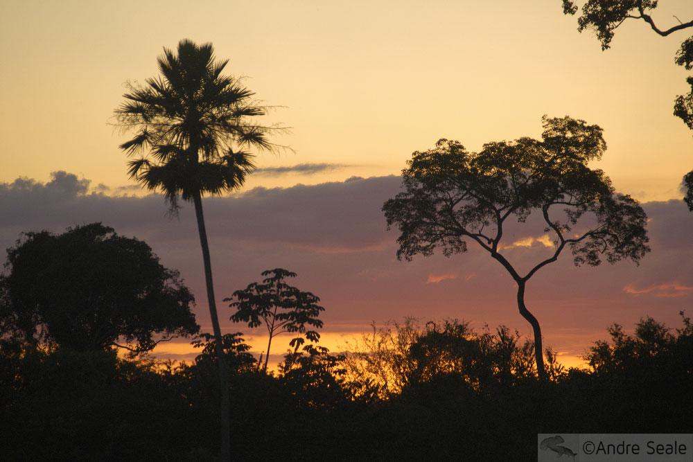 Bonito? Lindo! - Cambará palmeira do Pantanal