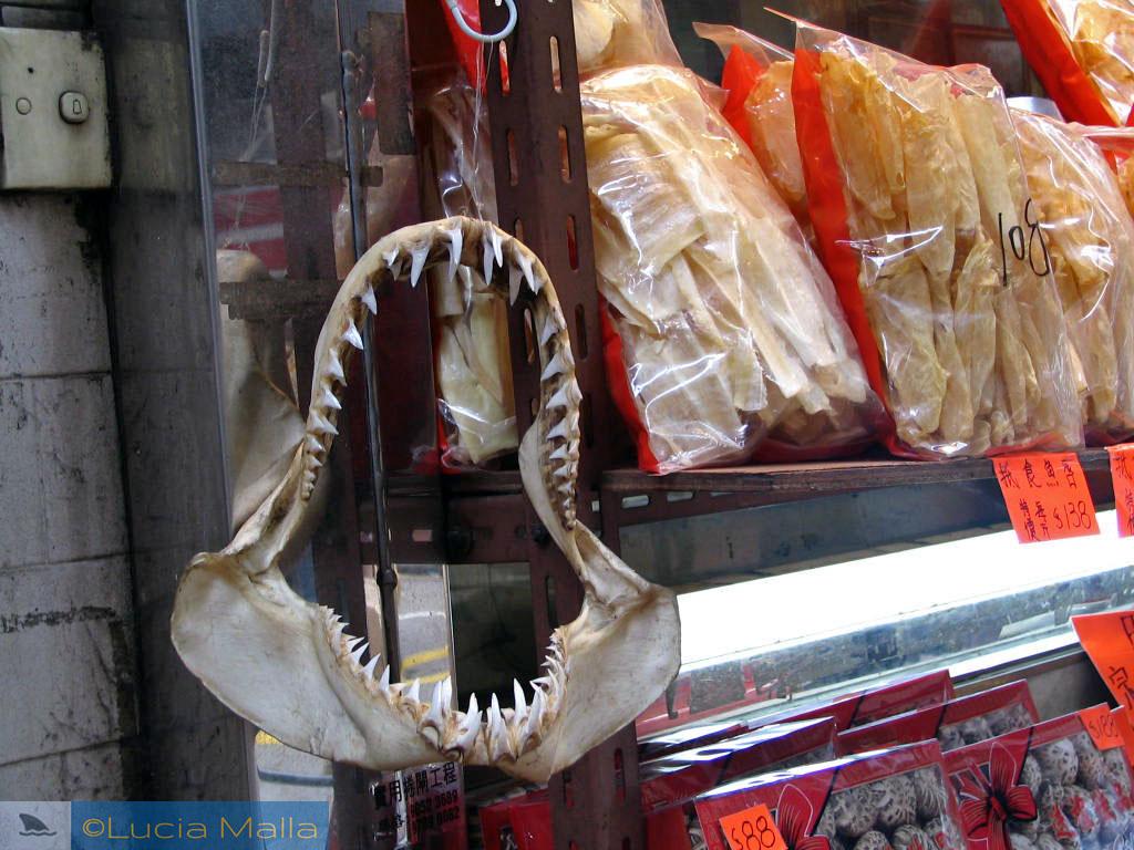 Mandíbula de tubarão - loga em Hong Kong