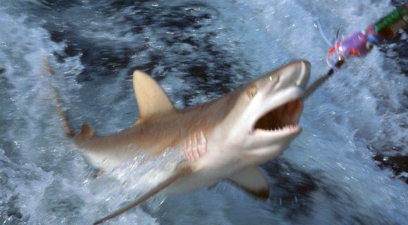 Ser tubarão na Ásia