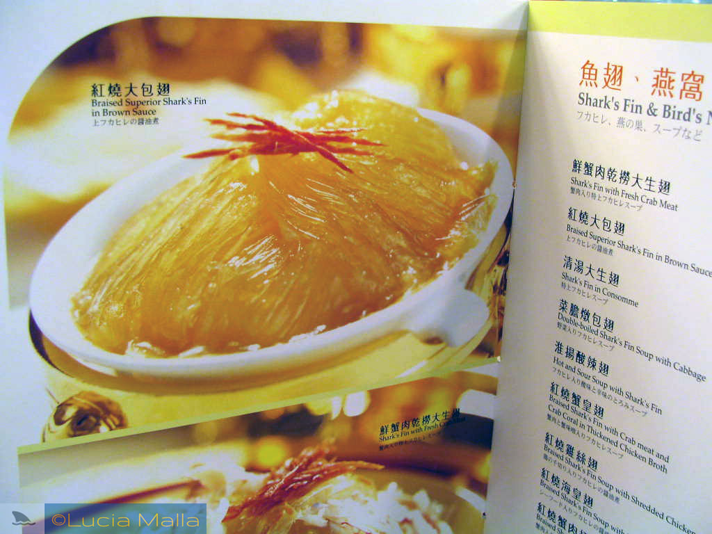 Menu na China - sopa de barbatana de tubarão na foto