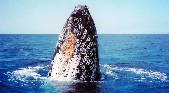 Embaixada das baleias