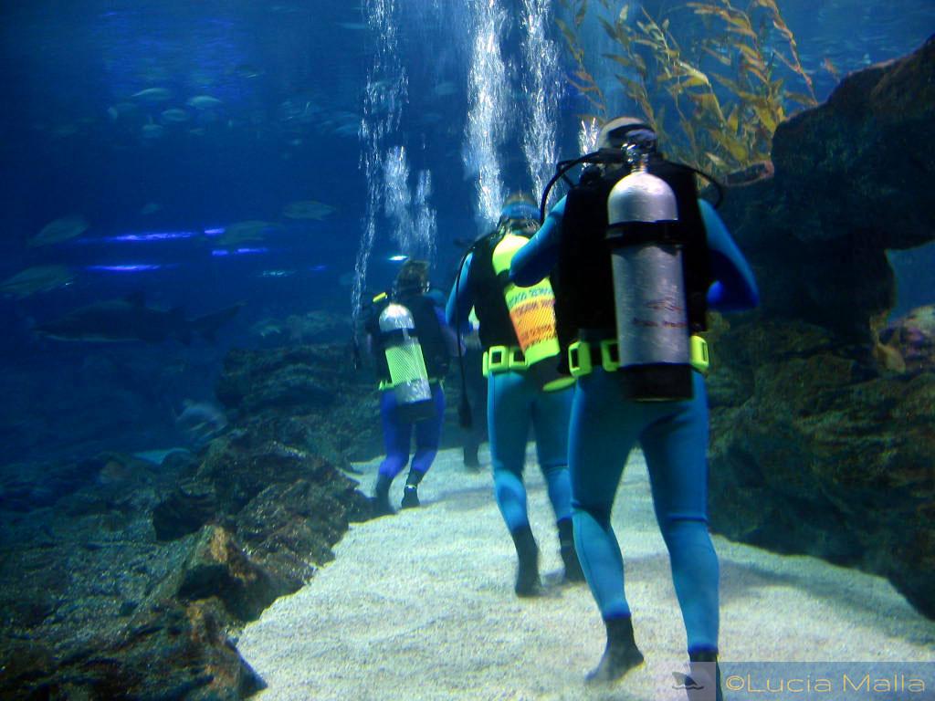 Mergulhadores - Aquário de Busan