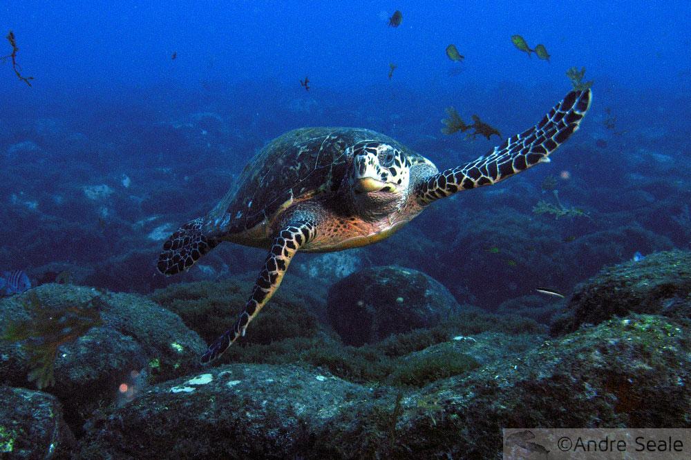 Mallices de viagem - tartaruga marinha - frustrações