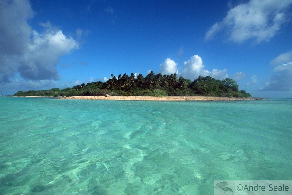 The Island - A Ilha - Clonespotting