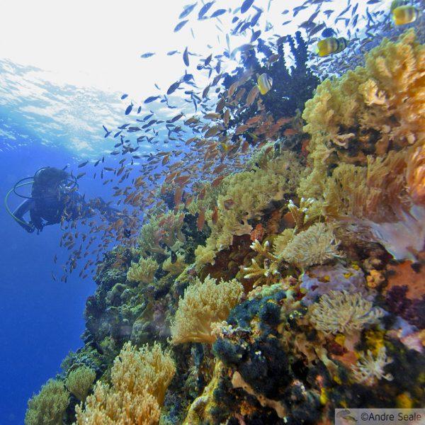 Esbranquiçamento de corais