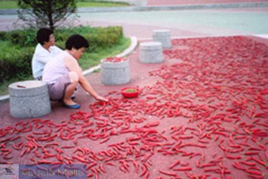 Pimenta na calçada para fazer kimchi - Coréia do Sul