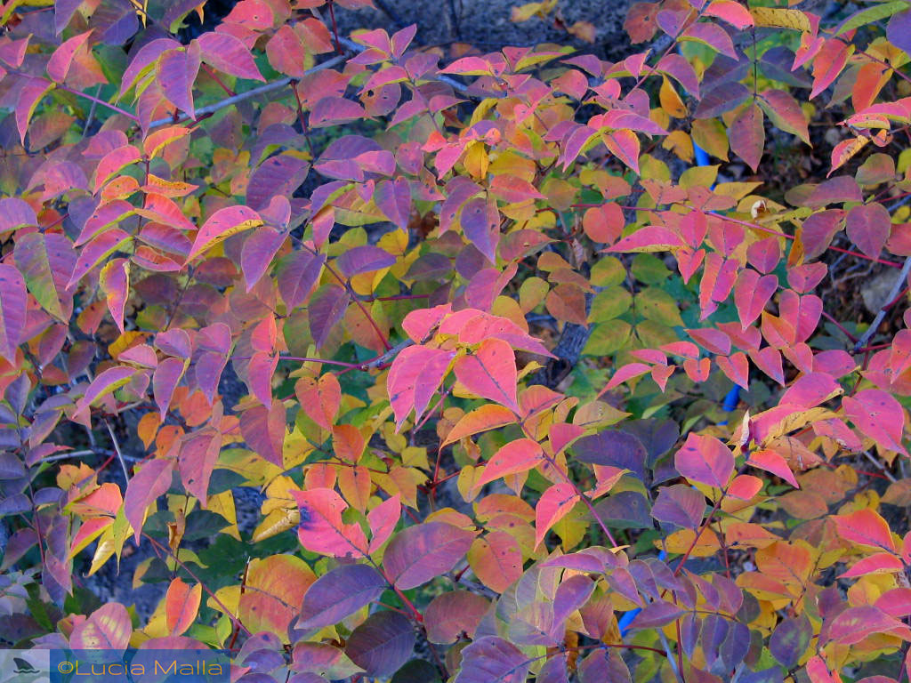 Folhas de outono no chão - Parque Nacional de Seoraksan - Coréia do Sul