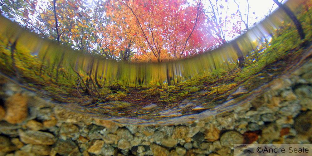 Folhagem de outono - Parque Nacional de Seoraksan