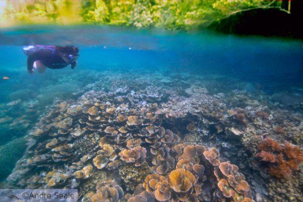 Por que Palau - snorkel