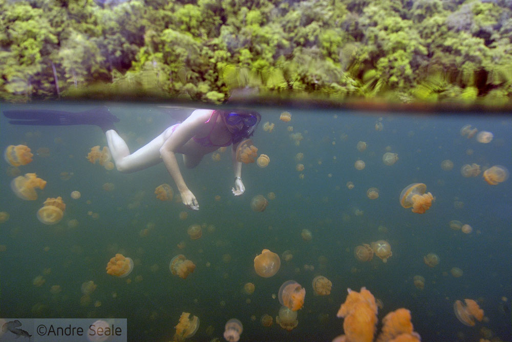 Lucy in the lake with jellyfishes - Palau