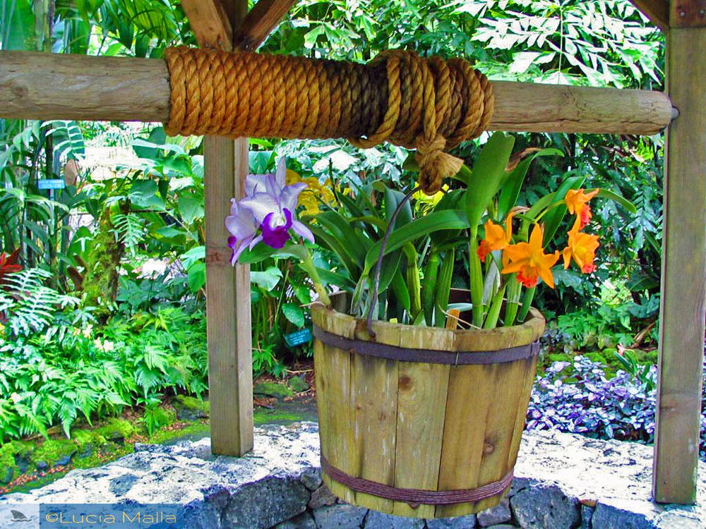 Vaso de flores no poço - Jardim Botânico de Hilo - Big Island