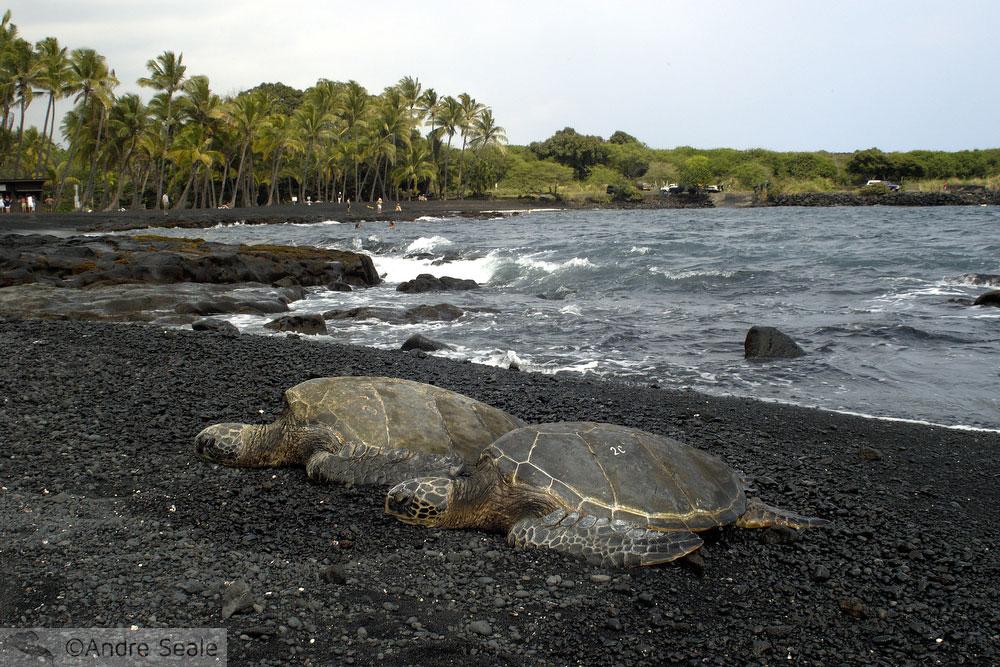 De Kona a Hilo - Black Sand Beach ou Punaluu - Big Island - Havaí
