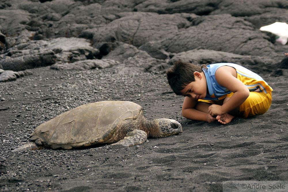 De Kona a Hilo - criança com tartaruga
