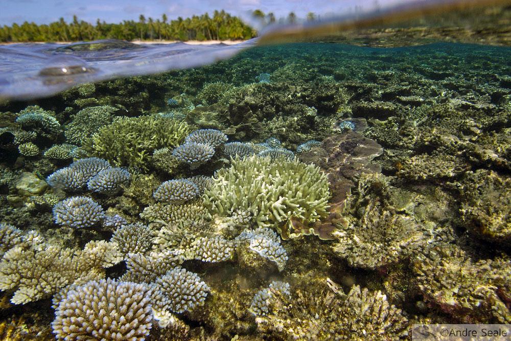 Atol de Ailuk - Ilhas Marshall
