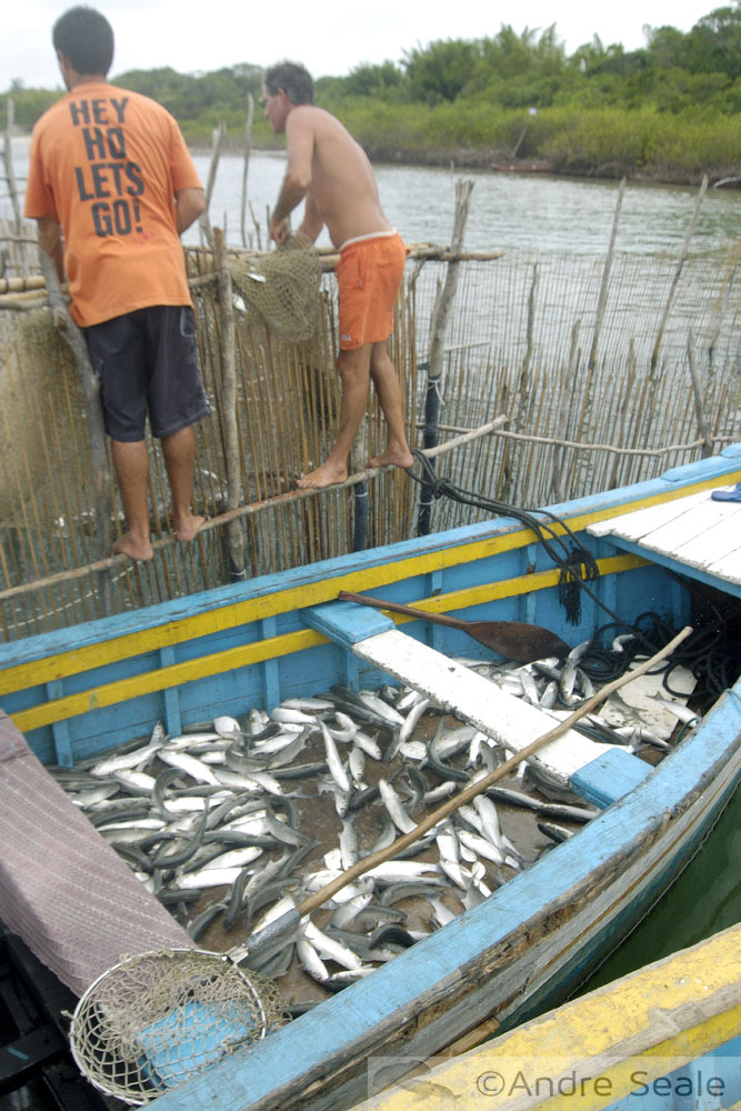 Pesca artesanal - Rastelando o mar