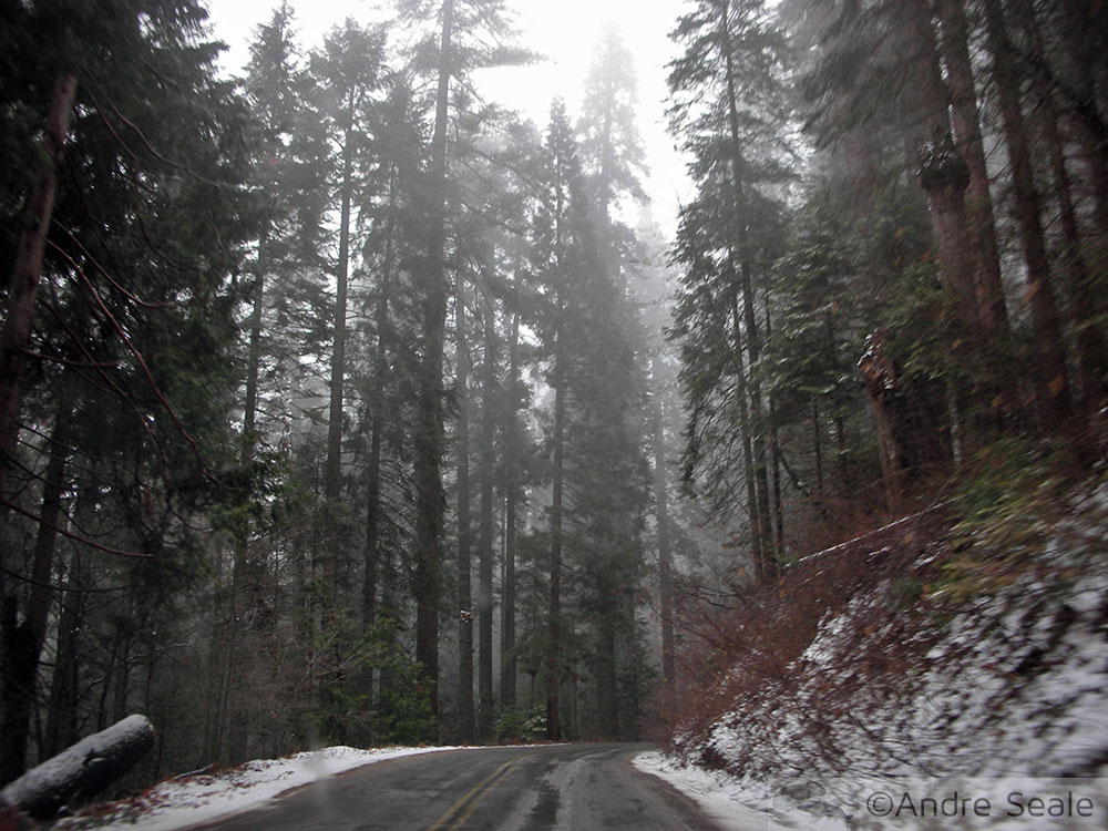 Estrada das Sequóias no inverno