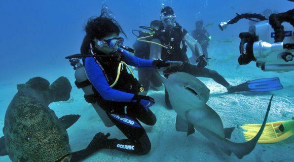Clique da semana – Mergulho em Key Largo