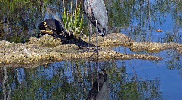 Parques nacionais americanos: Everglades