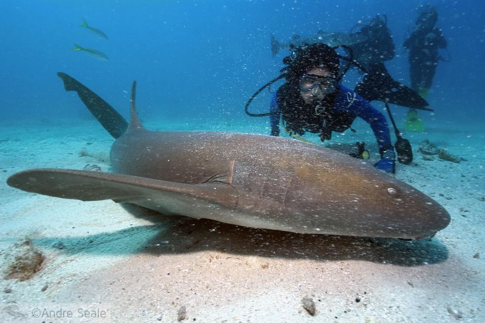 I love sharks - mergulho na Flórida