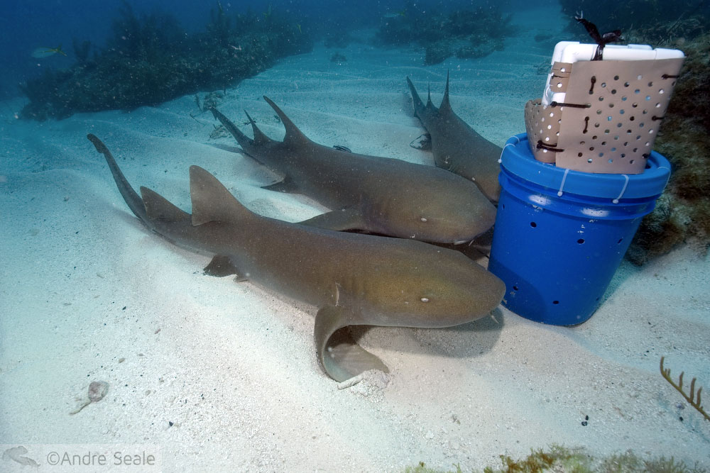 We love sharks - nurse sharks