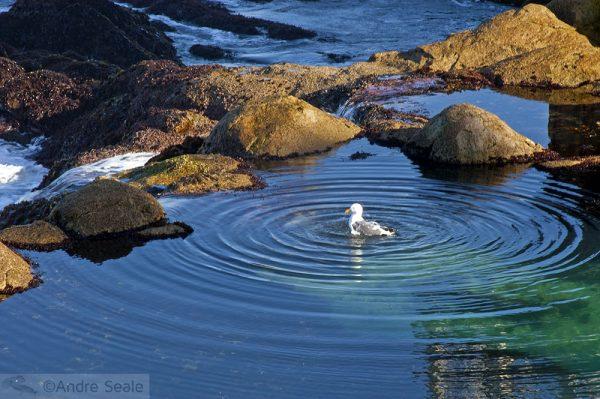 Aquário de Monterey
