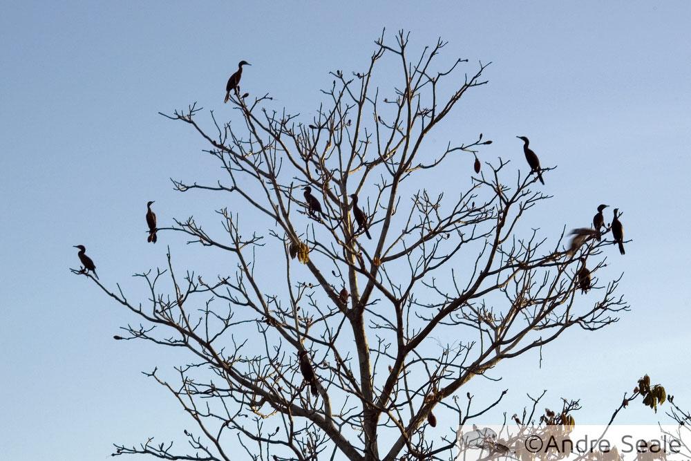Árvire com pássaros da Amazônia