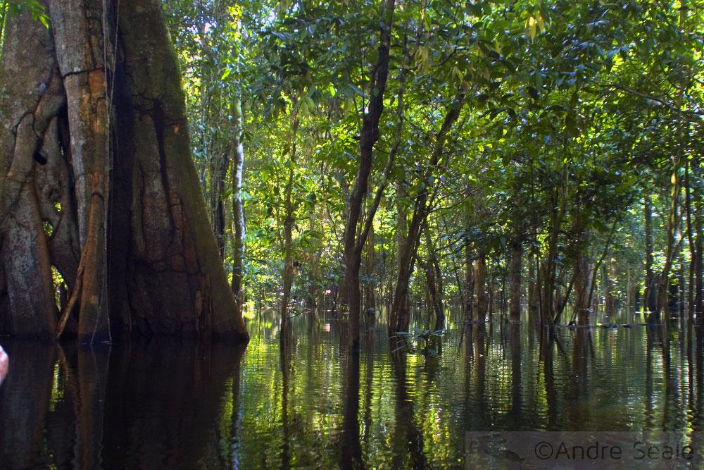 Amazônia inundada - a floresta