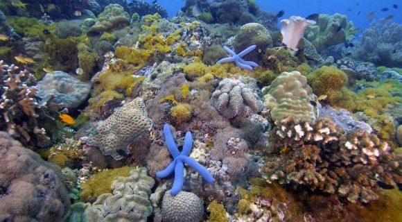 Consenso sobre os recifes de corais do mundo