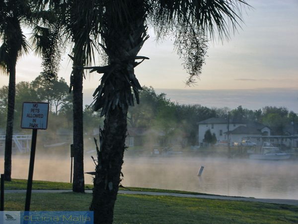 Crystal River fog