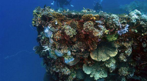 Os naufrágios do Truk Lagoon