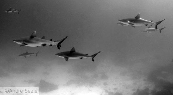 ONU e os tubarões