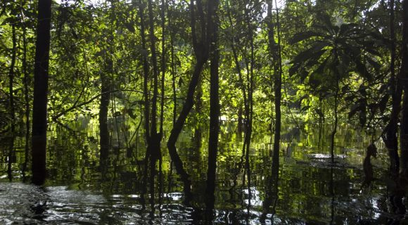 Wetlands: onde o ecossistema terrestre encontra a água