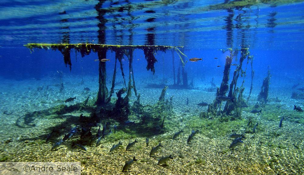 Aquário Natural Bonito