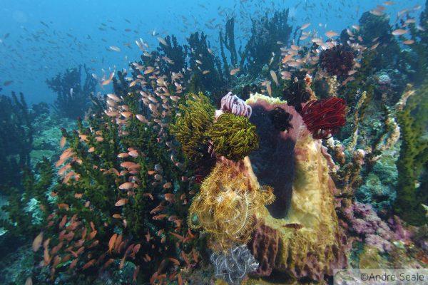 Biodiversidade e a 6a extinção
