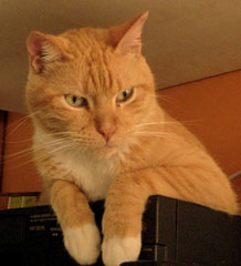 Gato Boris