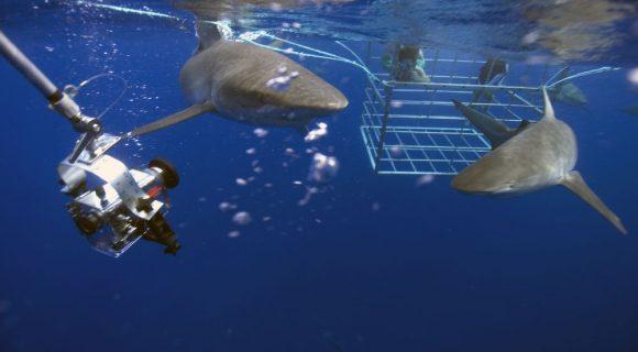 Sexta Sub: tubarões em ação