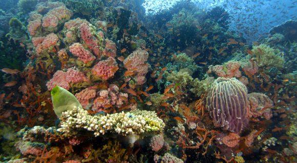 Sexta Sub: recife de coral