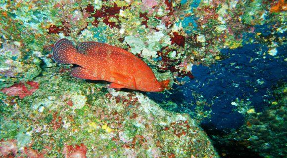 Semana do Coral: Mar de cores
