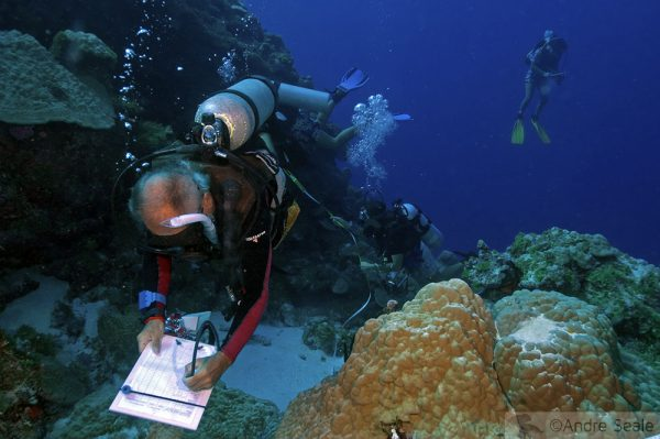 Semana do Coral - tabulação durante trabalho no recife