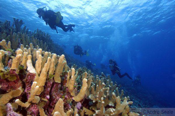 Semana do Coral - trabalho no recife