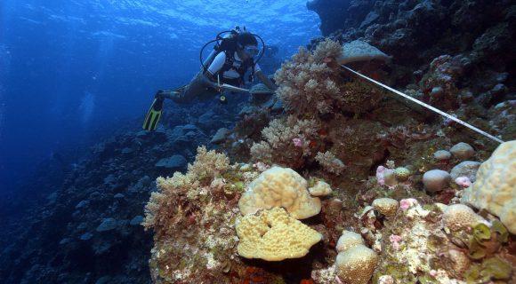 Semana do Coral: o trabalho no recife