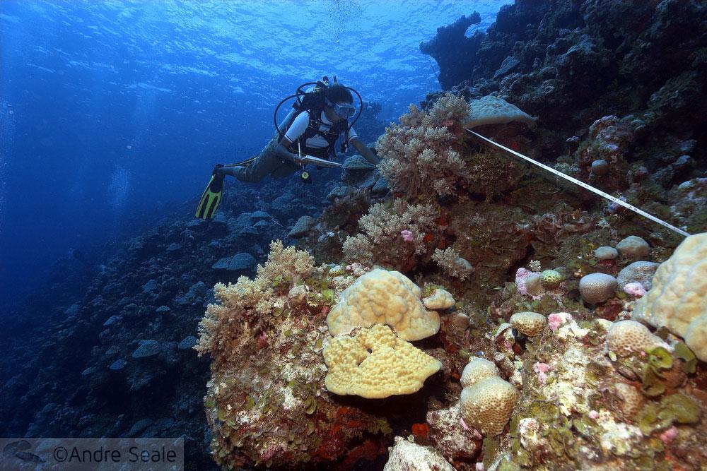 Trabalho no recife - mergulhadora