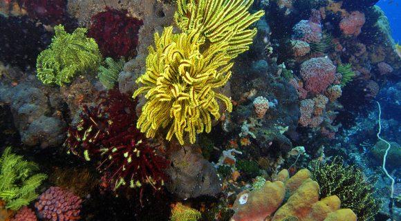2008 – Ano Internacional dos Recifes de Corais