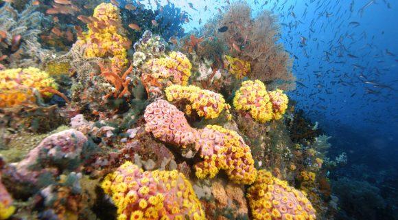 Sexta Sub: no epicentro da biodiversidade marinha do planeta