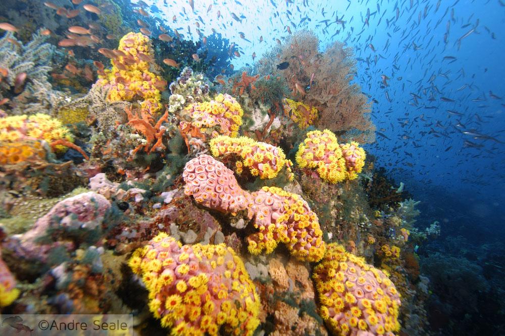 Sexta Sub - Corais coloridos na Ilha Verde - Filipinas