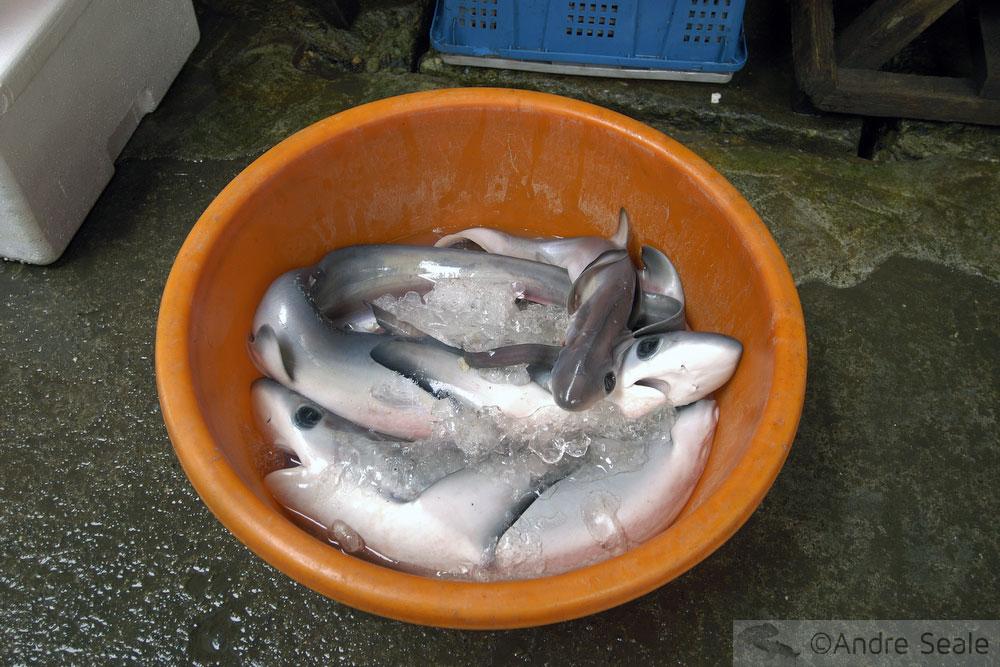Tubarões em bacia em mercado da China