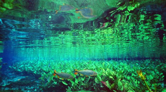 Sexta Sub: Rio Sucuri