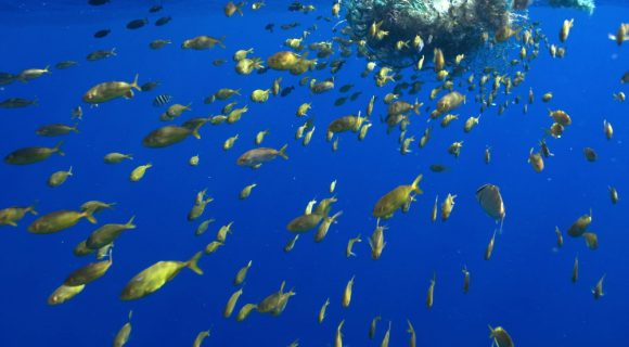 Sexta Sub: lixo no mar